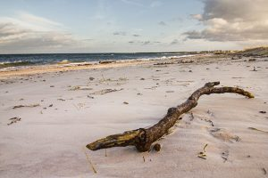 Nairn Beach with a log on the white sandy beach