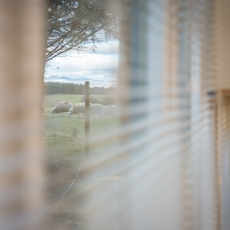 See the sheep through the window