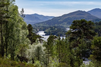 A view of the green Caledonian pines at Glen Affric