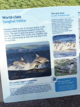 A poster showing information about the dolphins