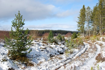 Abriachan trails covered with snow